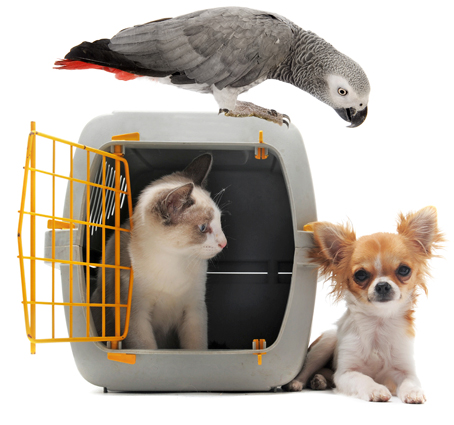 Image result for pet transport